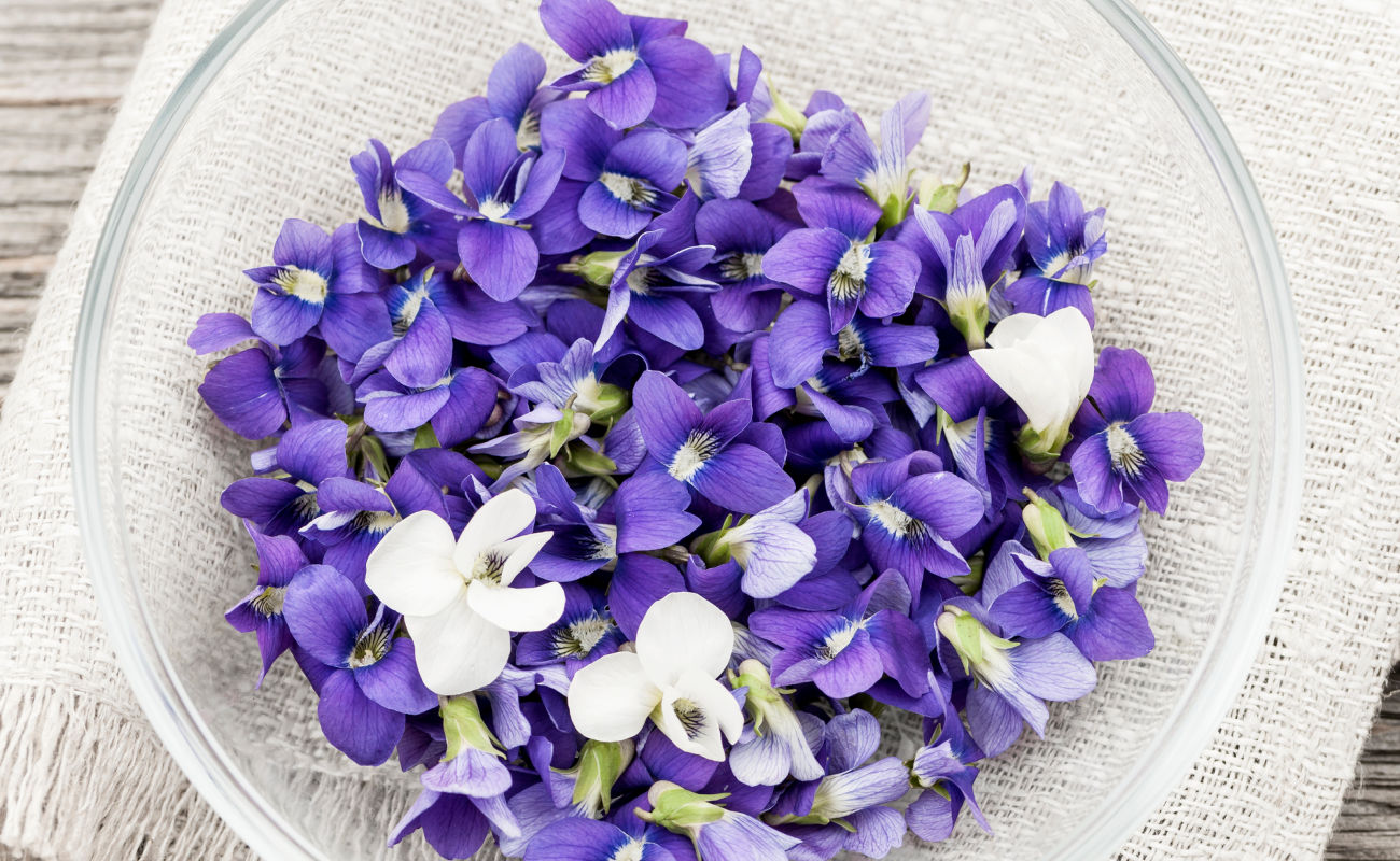 Foraged edible purple and white violet flowers in bowl from above